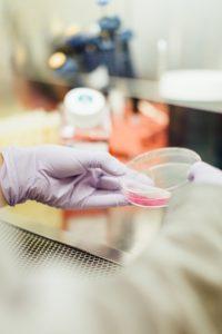 gut testing for gut health