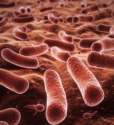 gut bacteria testing